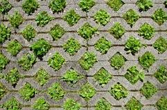 πέτρα πεζοδρομίων ανασκόπησης Στοκ φωτογραφία με δικαίωμα ελεύθερης χρήσης