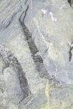 πέτρα προτύπων ρωγμών Στοκ Φωτογραφία