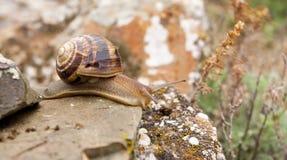 πέτρα σαλιγκαριών Στοκ Εικόνες