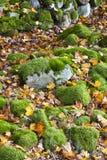 πέτρα σωρών λειχήνων Στοκ εικόνα με δικαίωμα ελεύθερης χρήσης