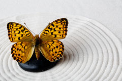 Πέτρα της Zen με την πεταλούδα Στοκ Φωτογραφίες