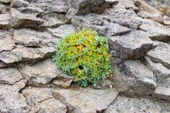 πέτρα φυτών Στοκ Εικόνες