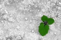 πέτρα φυτών Στοκ Εικόνα