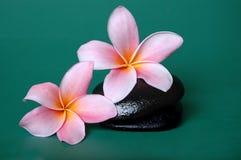 πέτρα frangipani zen Στοκ εικόνες με δικαίωμα ελεύθερης χρήσης