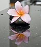 πέτρα frangipani zen Στοκ Εικόνες
