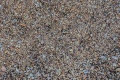 Πέτρες θάλασσας υποβάθρου, Chanthaburi Στοκ εικόνες με δικαίωμα ελεύθερης χρήσης