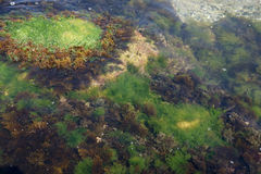Πέτρες θάλασσας - 7 Στοκ Φωτογραφία