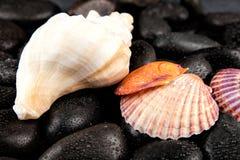 Πέτρες θαλασσινών κοχυλιών και SPA με τα σταγονίδια στο μαύρο υπόβαθρο Στοκ Εικόνες