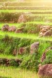 Πέτρες και χλόη στα πεζούλια Στοκ φωτογραφία με δικαίωμα ελεύθερης χρήσης