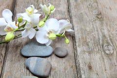 Πέτρες και orchid Zen Στοκ Φωτογραφία