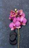 Πέτρες και orchid Zen SPA Στοκ φωτογραφία με δικαίωμα ελεύθερης χρήσης