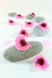 πέτρες μονοπατιών zen Στοκ εικόνες με δικαίωμα ελεύθερης χρήσης