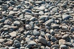 Πέτρες 5 παραλιών Borth Στοκ Εικόνα