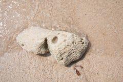 Πέτρες σε μια παραλία Στοκ Φωτογραφίες