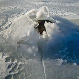 Πέτρες στον πάγο στην ακτή της θάλασσας της Βαλτικής Στοκ εικόνες με δικαίωμα ελεύθερης χρήσης