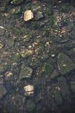 Πέτρες στο κατώτατο σημείο ποταμών Στοκ Εικόνες