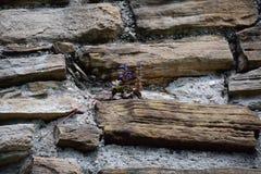 Πέτρες τοίχων Ols Στοκ Φωτογραφίες