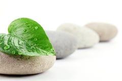 πέτρες φύλλων zen Στοκ εικόνα με δικαίωμα ελεύθερης χρήσης