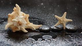 Πέτρες SPA, αστερίας και κοχύλι θάλασσας σε ένα σκοτεινό υπόβαθρο με τις πτώσεις και την αντανάκλαση νερού Στοκ φωτογραφία με δικαίωμα ελεύθερης χρήσης