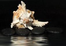 Πέτρες SPA και κοχύλι θάλασσας σε ένα σκοτεινό υπόβαθρο με τις πτώσεις νερού και αντανάκλαση, διάστημα αντιγράφων για το κείμενό  Στοκ Φωτογραφίες