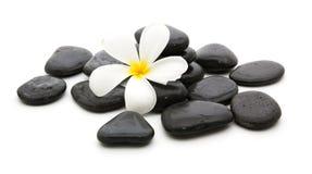 πέτρες SPA και όμορφο plumeria στο λευκό Στοκ Φωτογραφίες
