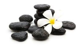 πέτρες SPA και όμορφο plumeria στο λευκό Στοκ Εικόνες
