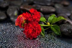 Πέτρες SPA με τα λουλούδια στο σκοτεινό υπόβαθρο Στοκ Εικόνα