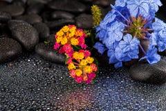 Πέτρες SPA με τα λουλούδια στο σκοτεινό υπόβαθρο Στοκ Φωτογραφίες