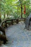 Πέτρινα βήματα στη ζούγκλα στοκ φωτογραφίες