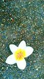 Πέτρινα λουλούδια Στοκ Φωτογραφία
