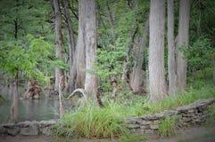 Πέτρινα περιβάλλοντα δέντρα τοίχων Στοκ φωτογραφία με δικαίωμα ελεύθερης χρήσης
