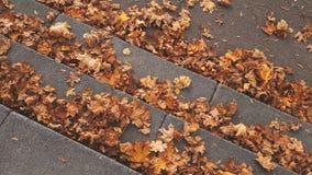 Πέτρινα σκαλοπάτια βημάτων στην αλέα πόλεων που καλύπτεται από τα απολύτως πεσμένα φύλλα απόθεμα βίντεο