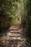 Πέτρινα σκαλοπάτια σε ένα δάσος σε Mlini, Κροατία στοκ εικόνα