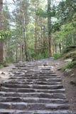 Πέτρινα σκαλοπάτια στην επαρχία Στοκ Εικόνες