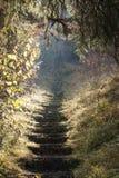 Πέτρινα σκαλοπάτια Στοκ εικόνες με δικαίωμα ελεύθερης χρήσης