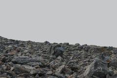 Πέτρινα cobbles σε ένα γκρίζο υπόβαθρο Στοκ Εικόνα
