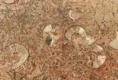 Πέτρινη απολιθωμένη σύσταση υποβάθρου Στοκ Εικόνα