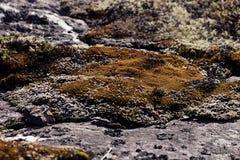 Πέτρινη επιφάνεια με την πολύχρωμη κινηματογράφηση σε πρώτο πλάνο βρύων και λειχήνων Στοκ φωτογραφίες με δικαίωμα ελεύθερης χρήσης