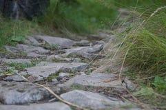 Πέτρινη πορεία στο δάσος, Polenovo Στοκ Εικόνες