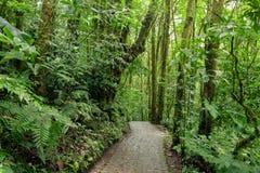 Πέτρινη πορεία στο τροπικό δάσος Monteverde Κόστα Ρίκα Στοκ Φωτογραφία