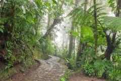 Πέτρινη πορεία στο τροπικό δάσος Monteverde Κόστα Ρίκα Στοκ Φωτογραφίες