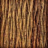 Πέτρινη πλάτη πεύκων Στοκ φωτογραφία με δικαίωμα ελεύθερης χρήσης