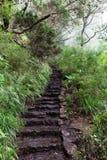 Πέτρινη σκάλα στον τρόπο Risco στην πηγή στο νησί της Μαδέρας στοκ φωτογραφίες