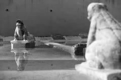 Πέτρινοι βάτραχοι Στοκ εικόνα με δικαίωμα ελεύθερης χρήσης