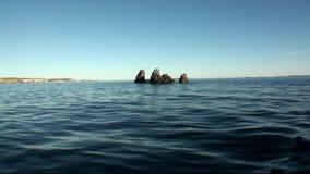 Πέτρινοι βράχοι μεταξύ της επιφάνειας νερού του αρκτικού ωκεανού στη νέα γη απόθεμα βίντεο