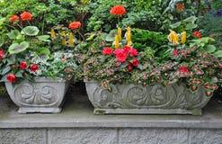 Πέτρινοι καλλιεργητές λουλουδιών Στοκ φωτογραφίες με δικαίωμα ελεύθερης χρήσης