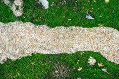 Πέτρινος δρόμος και πράσινο υπόβαθρο βρύου Στοκ Φωτογραφία