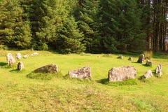 Πέτρινος κύκλος σε Dartmoor Στοκ Φωτογραφίες