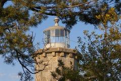 Πέτρινος πύργος φάρων που περιβάλλεται από τα δέντρα πεύκων Στοκ εικόνες με δικαίωμα ελεύθερης χρήσης