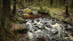 Πέτρινος ρόλος στο γρήγορο ποταμό απόθεμα βίντεο